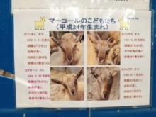 zoo_10